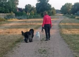 Los lopen tijdens de wandeling